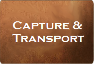 Button linking to Capture and Transport page
