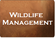 Button linking to Wildlife Management page